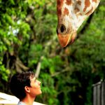 Das Giraffen-Syndrom