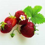 Ernährung für Geist und Körper
