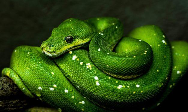 Tabula Smaragdina